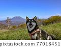 mount yotei, yoteizan, black shiba 77018451