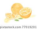 橙色 橘子 橙子 77019201