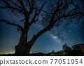 星空 樹木 樹 77051954