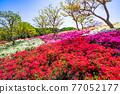 花園 翠綠 鮮綠 77052177