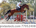 Young man jumping horse on his show jumping course 77052408