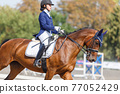 Young girl riding horse at dressage advanced test 77052429