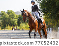 Young girl riding horse at dressage advanced test 77052432