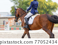 Young girl riding horse at dressage advanced test 77052434