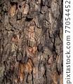 Tree bark texture 77054452