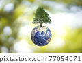 Planet Earth globe ball and growing tree on green sunny blurred background.  77054671
