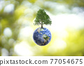 Planet Earth globe ball and growing tree on green sunny blurred background.  77054675