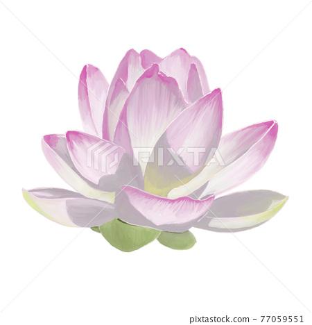 lotus, flower, bloom 77059551