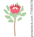 Simple Pink Protea Isolated on White Background 77060078