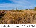 Tablas de Daimiel National Park, Castilla la Mancha, Spain 77071761