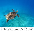 바다 거북 77073741
