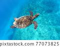 바다 거북 77073825