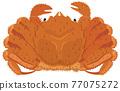 hair crab, crab, crabs 77075272