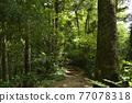 takao mountain, tender green, verdure 77078318