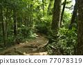 takao mountain, tender green, verdure 77078319