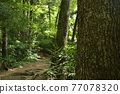 takao mountain, tender green, verdure 77078320