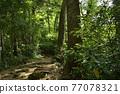 takao mountain, tender green, verdure 77078321