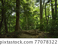 takao mountain, tender green, verdure 77078322