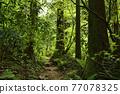 takao mountain, tender green, verdure 77078325