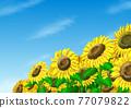 Sunflower and sky 77079822