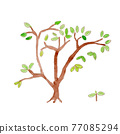 樹木 樹 木頭 77085294