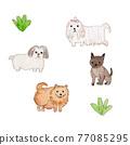動物 毛孩 小型犬 77085295