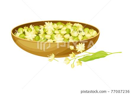 Linden or Tilia Cordata Blossom and Drupe Fruit Rested in Wooden Bowl Vector Illustration 77087236