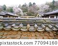 한국민속촌의 봄 77094160