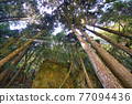 The morning sunlight in the forest. The Sun-Link-Sea Forest and Nature Resort is located in Nantou County, Taiwan. 77094436