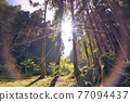 The morning sunlight in the forest. Colorful Sun Lens Flare. The Sun-Link-Sea Forest and Nature Resort is located in Nantou County, Taiwan. 77094437