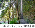 The sun shines on the trail in the forest park. The Sun-Link-Sea Forest and Nature Resort is located in Nantou County, Taiwan. 77094438