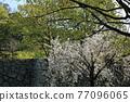Himeji castle 77096065