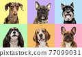 Art collage made of funny dogs different breeds on multicolored studio background. 77099031