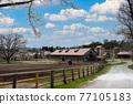 牛棚 牧場 景觀 77105183