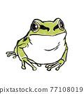 日本樹蛙 日本樹蟾 樹蛙 77108019