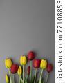 花 鬱金香 背景 77108858