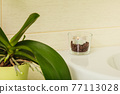 Flower and little candle in coffee beans 77113028