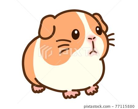 guinea pig, guinea-pig, guineapig 77115880