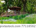公園 園林綠化 花園 77116562