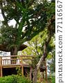 樹木 樹 木頭 77116567