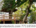 營地 露營 公園 77116569