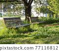 翠綠 鮮綠 長凳 77116812