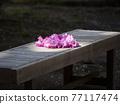 杜鵑花 花朵 花 77117474