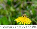 bee, hive bee, honeybee 77122396
