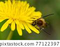 bee, hive bee, honeybee 77122397