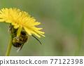 bee, hive bee, honeybee 77122398