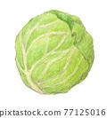 cabbage, cabbages, oleracea 77125016