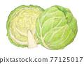 cabbage, cabbages, oleracea 77125017