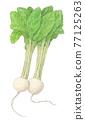 vegetables, vegetable, radish 77125263