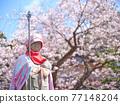 親愛的櫻花和地藏 77148204
